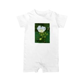 芙蓉 DATA_P_132 Confederate Rose ハスの花の古名 Baby rompers