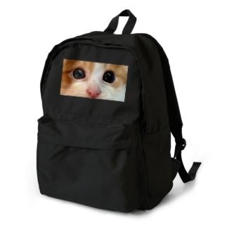 ネコちゃんを背負ってます Backpack