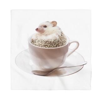 ティーカップ ハリネズミ Bandana