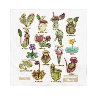 食虫植物図鑑 Bandana