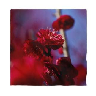 赤い梅(写真) Bandana