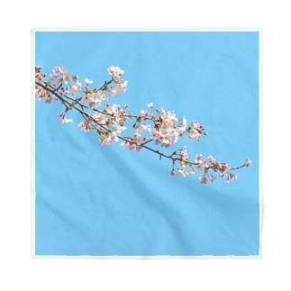 咲く  ~桜~ Bandana