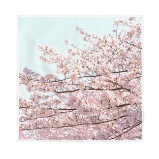 咲く  ~桜~  2 Bandana