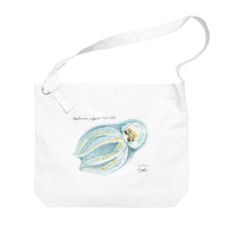 クラゲダコ Amphitretus pelagicus Big shoulder bags