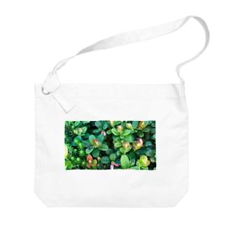 乗鞍岳の高山植物 Big shoulder bags