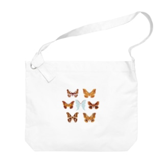 身近なヤママユガ科(♂)7種 Big shoulder bags