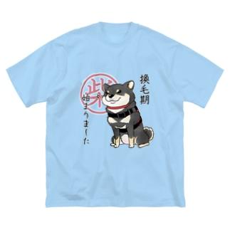 換毛期/キリッ(黒柴) Big silhouette T-shirts