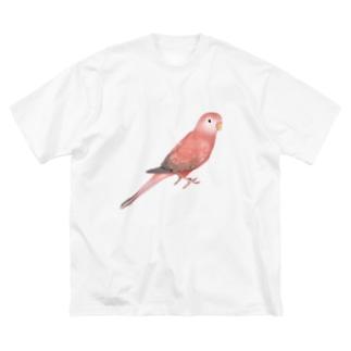 アキクサインコ ピンク【まめるりはことり】 Big silhouette T-shirts