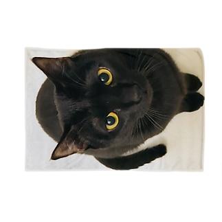 黒猫の零衣ちゃん Blankets