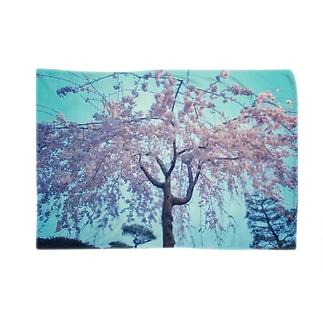 枝垂れ桜 Blankets