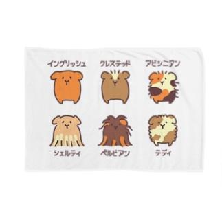 モルモット6種盛り合わせ Blankets