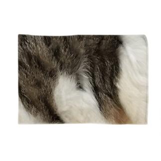 綾四季/猫の毛柄004 Blankets