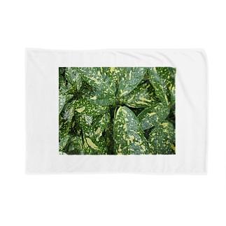 グリーングリーン!! Blankets