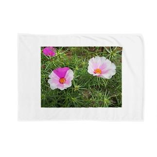 ピンクのマダラちゃん Blankets