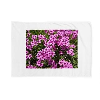 野の花の可憐さ・・・ Blankets