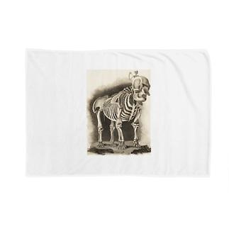 銅版画による人体骸骨 Blankets