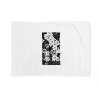 masato 4 Blankets
