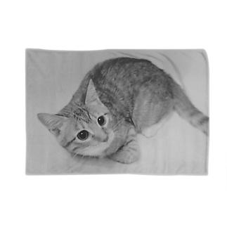 モノクロ猫 Blankets