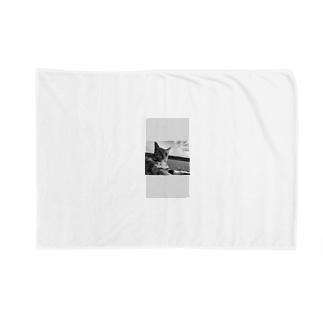 猫 Blankets