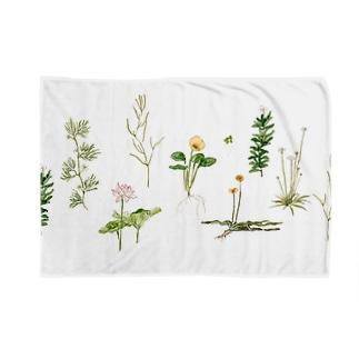 水草と花 Blankets