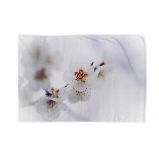 白梅 Blankets