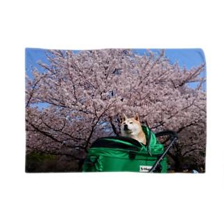 豆柴ビーンと桜 Blankets