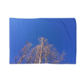晴れた日のメタセコイア Blankets