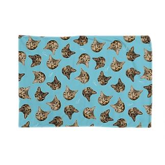 サンプル Blankets