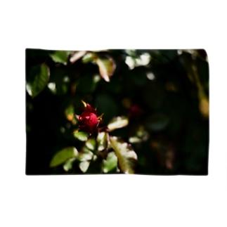 一輪の赤い薔薇 Blankets