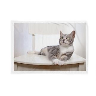 cat_20190506_8165 Blankets