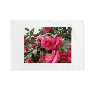 Pink camelia blooming カメリア Blankets