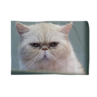 いつかの猫(大) Blankets