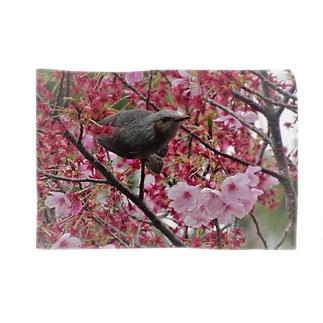 桜とヒヨドリ Blankets
