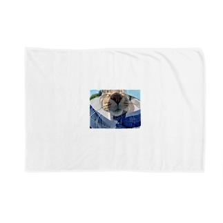 魚眼越し猫ちゃん Blankets