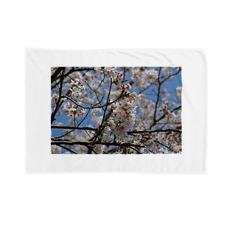 桜ーSAKURAー Blanket