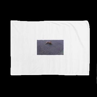 〰️〰️のちゃんねこ Blankets