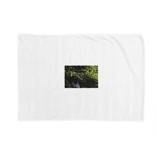 草の匂い Blankets
