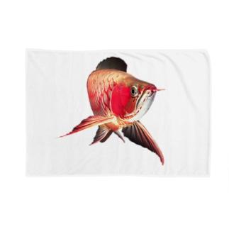 紅龍(アジアアロワナの一種) Blankets