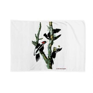 アメリカハシジロキツツキ Blankets