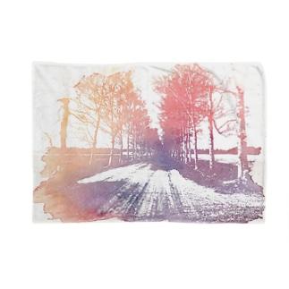 白樺並木  Blankets