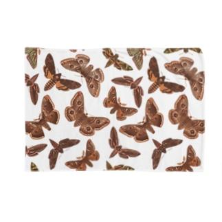 欧州の蛾 Blankets