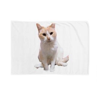 にゃん息子 Blankets