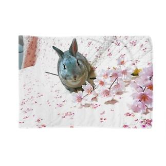 桜ウサコロ Blankets