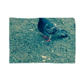 蒼い鳩 ブランケット