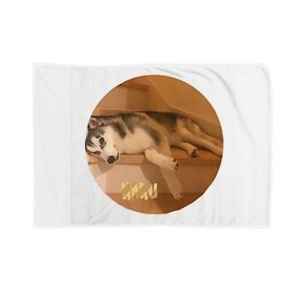 ハスキー  「HAKU」 Blankets