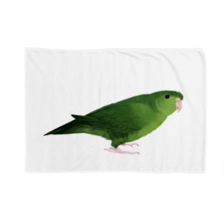 サザナミインコ グリーン【まめるりはことり】 Blankets