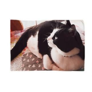 ちーちゃんの 微睡み Blankets