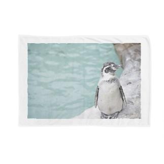 うちまたペンギン Blankets