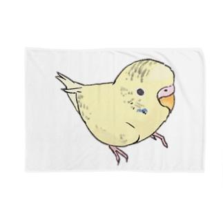 可愛いセキセイインコ おすましちゃん【まめるりはことり】 Blankets