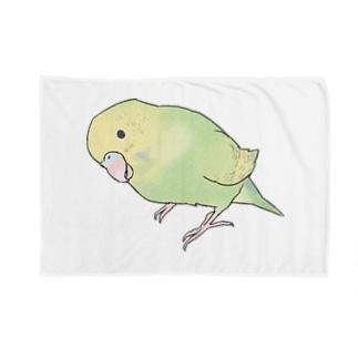 首傾げ スパングルセキセイインコちゃん【まめるりはことり】 Blankets